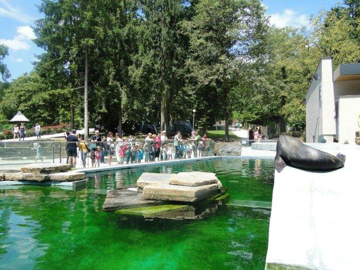 Ljubljana-zoo-sealion